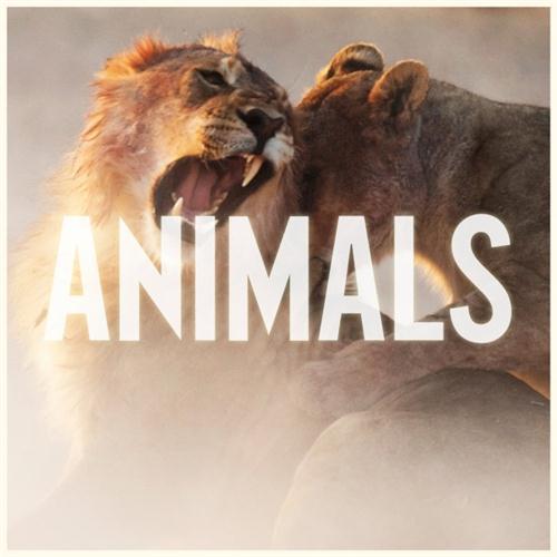 Maroon 5 Animals l'art de couverture