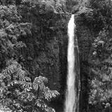 Akaka Falls (Ka Wailele O Akaka)