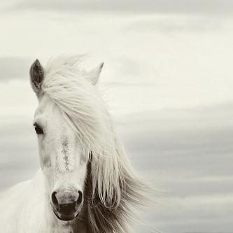 Chilean Folksong Mi Caballo Blanco (My White Horse) cover art