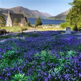 The Bluebells Of Scotland