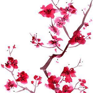 Audrey Snyder Sakura (Cherry Blossoms) cover art