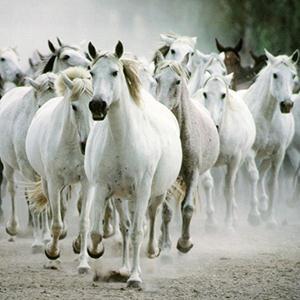 Traditional All The Pretty Little Horses (arr. Jeffrey Douma) cover art