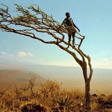 Traditional Zacchaeus cover art